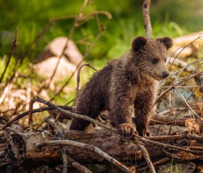 Animali in estinzione in Italia: lista completa
